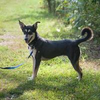 Adopt A Pet :: Curry - Jackson, MI