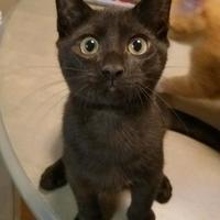 Adopt A Pet :: Bandit - Richmond, VA