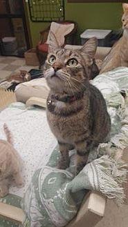 Domestic Mediumhair Cat for adoption in Hastings, Minnesota - P!nk