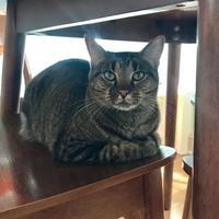 Adopt A Pet :: NEKIDA - Houston, TX