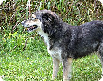 Australian Shepherd Mix Dog for adoption in Mt Sterling, Kentucky - Maggie