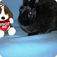 Adopt A Pet :: Fatboy Slim - Wethersfield, CT