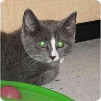 Adopt A Pet :: Mary - Jenkintown, PA
