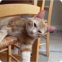 Adopt A Pet :: Gizmo - Portland, OR