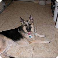 Adopt A Pet :: Roger - Green Cove Springs, FL