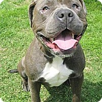 Adopt A Pet :: Pebbles - Reisterstown, MD