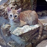 Adopt A Pet :: Pete - Ocala, FL