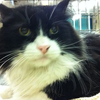 Adopt A Pet :: Spike - Pittstown, NJ