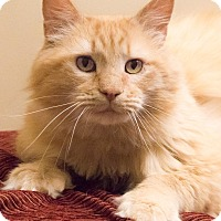 Adopt A Pet :: Garfield - Chicago, IL