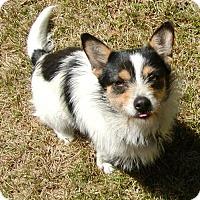 Adopt A Pet :: Annie - CARISLE, PA