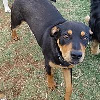 Adopt A Pet :: Rex - Snyder, TX