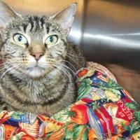 Adopt A Pet :: Tootie - Westville, IN