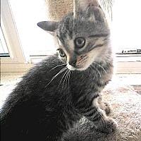 Adopt A Pet :: Veck - Hamilton, ON