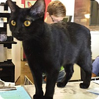 Adopt A Pet :: Stella - Chino, CA