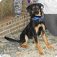 Adopt A Pet :: GUINNESS / DORA - SAN ANTONIO, TX