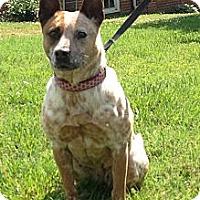 Adopt A Pet :: Daisy - Siler City, NC