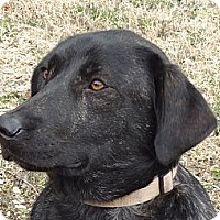Adopt A Pet :: Sweetie - Parsons, TN