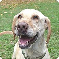 Adopt A Pet :: Sapphire - Mocksville, NC