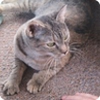 Adopt A Pet :: Roslyn - Vancouver, BC