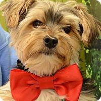 Adopt A Pet :: Chancey - Rockaway, NJ