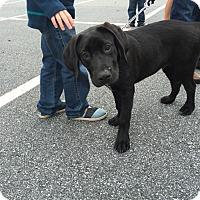 Adopt A Pet :: Fischer - Cumming, GA