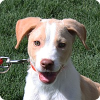 Adopt A Pet :: Penny - PENDING - kennebunkport, ME