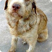 Adopt A Pet :: Junior - Oakley, CA