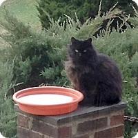 Adopt A Pet :: Sally Mae - Washington, VA