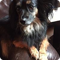 Adopt A Pet :: Buddy - Toluca Lake, CA