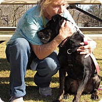 Rottweiler Mix Dog for adoption in Baltimore, Maryland - Solly