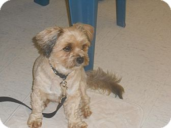 Terrier (Unknown Type, Small) Mix Dog for adoption in Lockhart, Texas - Bobby