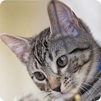Adopt A Pet :: SYLVIE - Houston, TX