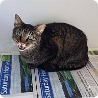 Adopt A Pet :: Mrs. Tiger - Mission, KS