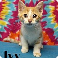 Adopt A Pet :: Ivy - Taylor Mill, KY