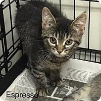 Adopt A Pet :: Espresso - Island Park, NY