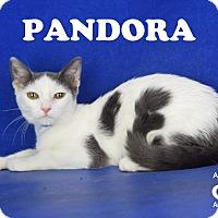 Adopt A Pet :: Pandora - Carencro, LA