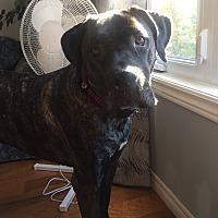 Adopt A Pet :: Jaxx - Treton, ON