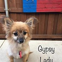 Adopt A Pet :: Gypsy Lady - Dallas, TX