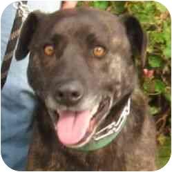 German Shepherd Dog Mix Dog for adoption in Berkeley, California - Kyle