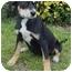 Photo 1 - Hound (Unknown Type) Mix Puppy for adoption in Brenham, Texas - Paige