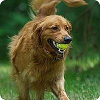 Adopt A Pet :: Hunter - Danbury, CT