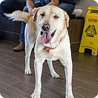 Adopt A Pet :: Big Boy - Cumming, GA