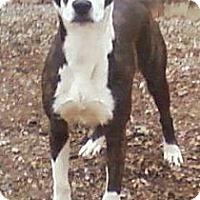 Adopt A Pet :: Ollie - Toledo, OH