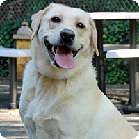 Adopt A Pet :: Sunny - Port Washington, NY