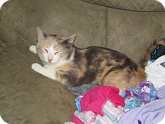 Calico Cat for adoption in sanford, North Carolina - Cinnamon