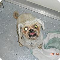 Adopt A Pet :: CHARLIE BEAR - Sandusky, OH