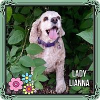 Adopt A Pet :: Lianna - Santa Barbara, CA