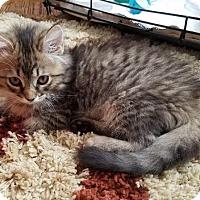 Adopt A Pet :: Ashley - Barrington, NJ