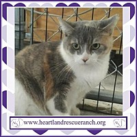 Adopt A Pet :: Skittles - Southport, FL