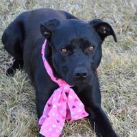 Adopt A Pet :: Clipper - Elk Grove Village, IL